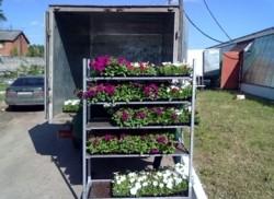 Перевозка растений в горшках